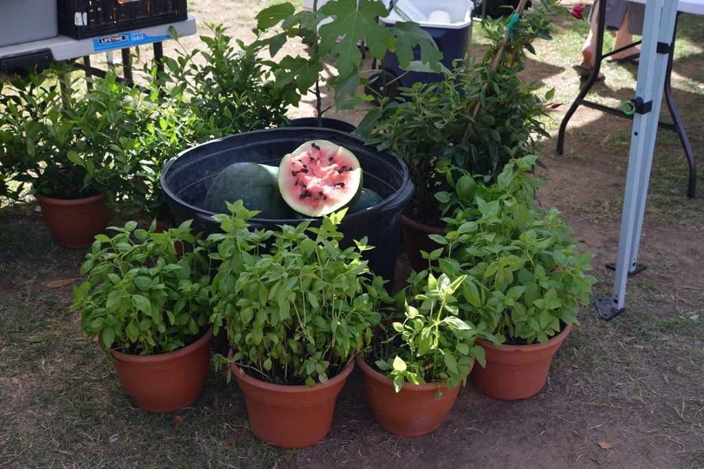 Farmers-Market-Watermelon-1024x683